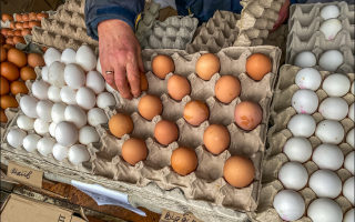 Почему на Украине такие большие яйца? Секрет раскрыла мне баба Маня с колхозного рынка