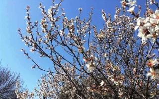 Афины погода в феврале