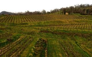 Фриули венеция джулия винодельческий регион