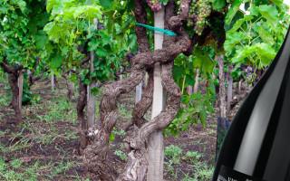 Коронный напиток итальянских виноделов